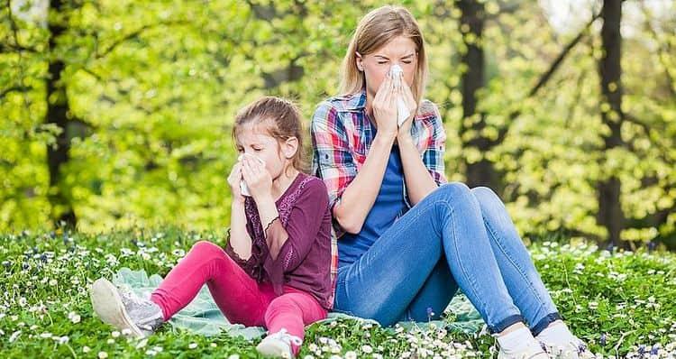 Во время цветения коры ясеня может вызывать аллергию.