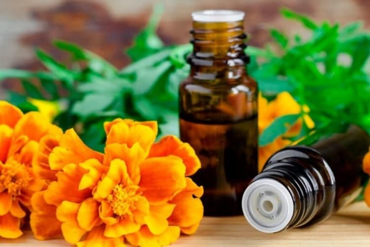 Масло из цветков используется для заживления ран.