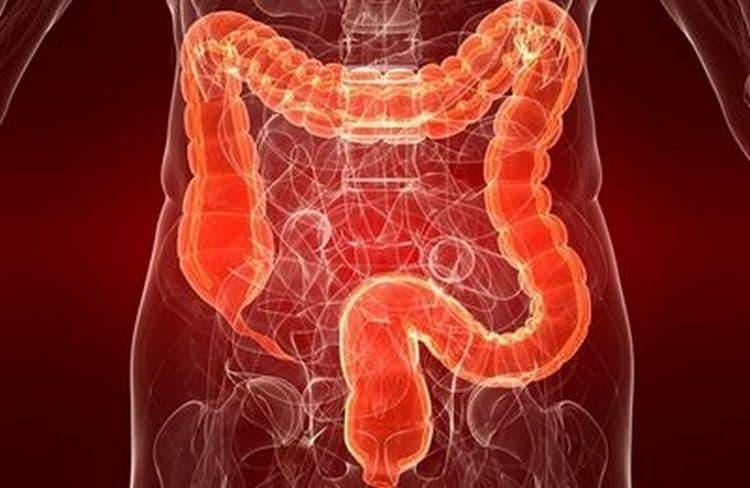 Растение используется при лечении проблем с кишечником.