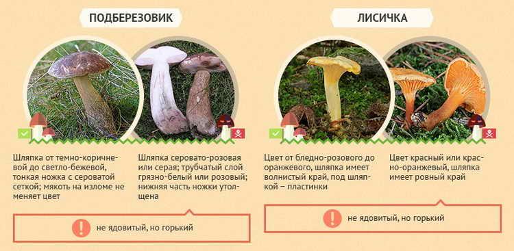 меры первой помощи при отравлении грибами