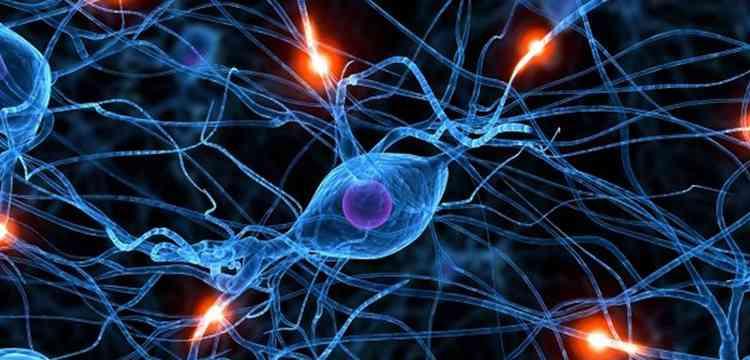 Хлорелла поможет нервной системе