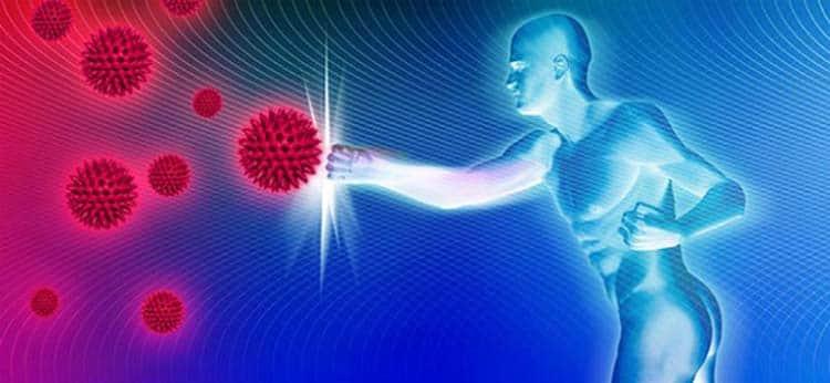 Укрепление иммунной системы благодаря пажитнику