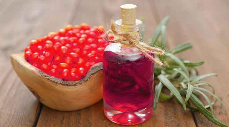 Шефердия польза масла растения