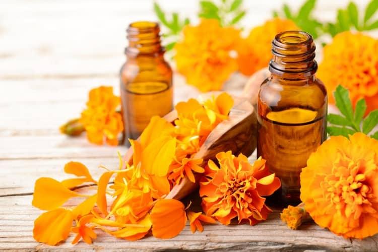 Многими полезными свойствами обладает масло бархатцев.