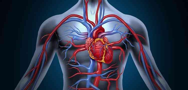 Ягоды Годжи укрепит сердце и сосуды
