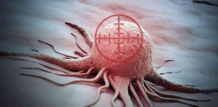 Актинидия в лечении рака