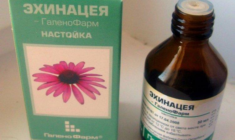 Хороший эффект при лечении воспаления лимфоузлов на шее у ребенка дает эхинацея.