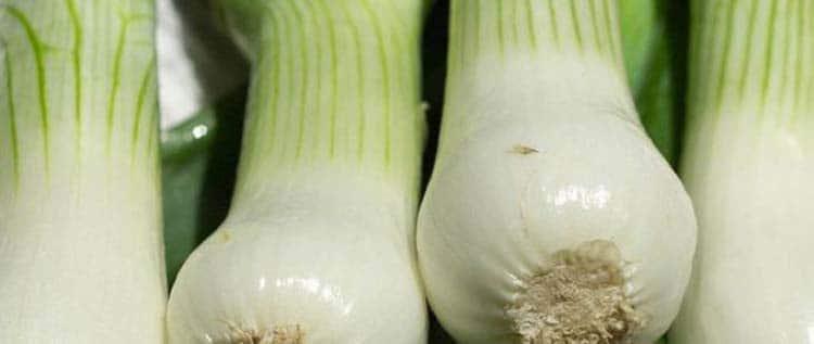 Полезные витамины которые находятся в зеленом луке