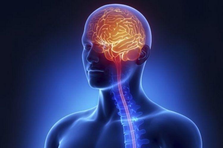 Золотой корень помогает стимулировать нервную систему.