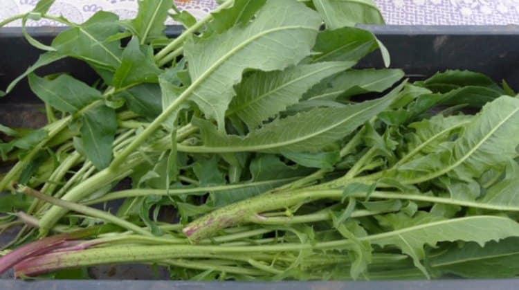 растение достаточно популярно и широко используется в кулинарии.