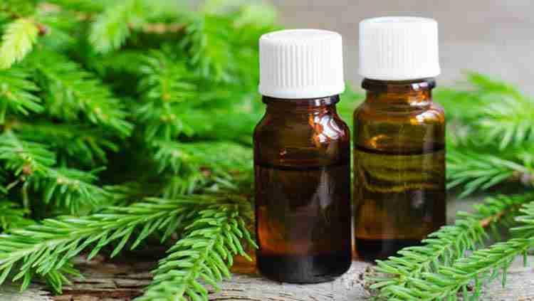 Пихта сибирская польза эфирного масла