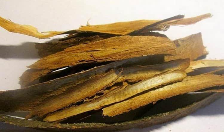 Народная медицина использует также кору дерева.