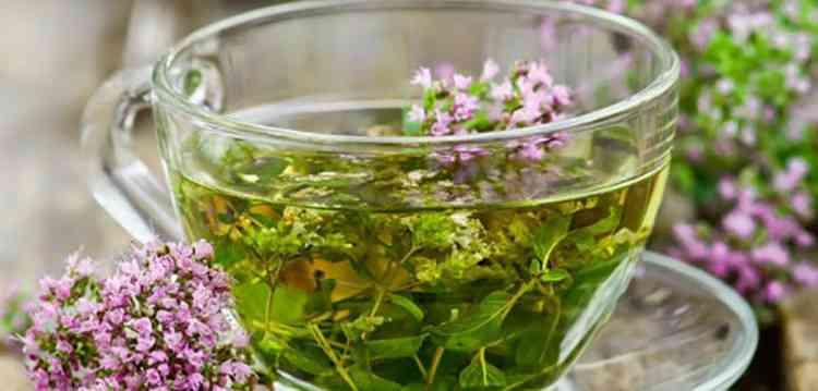 Шалфей польза чая