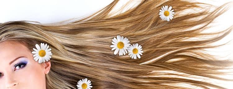 Польза нивяника для волос