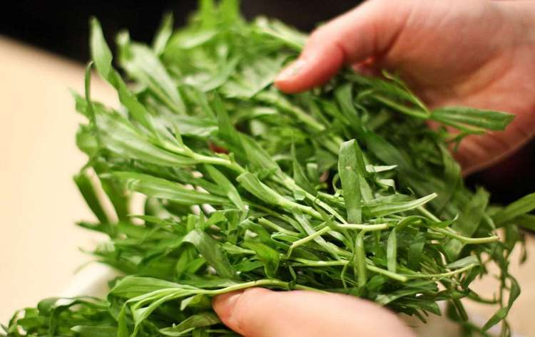 Узнайте все о полезных свойствах и применении травы тархун (эстрагон).