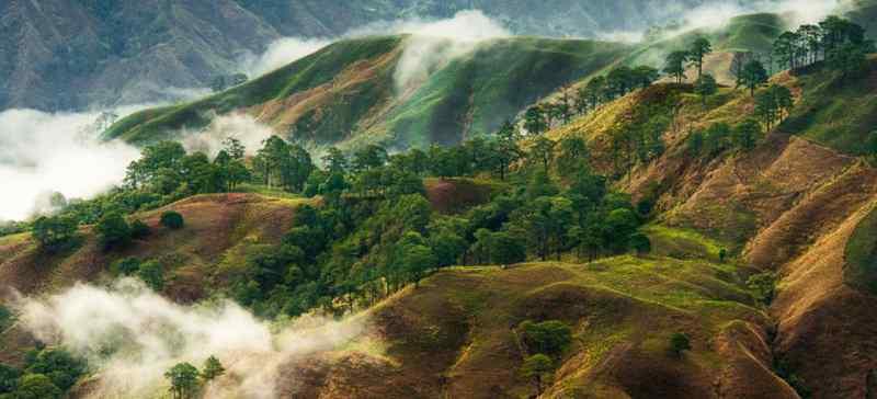 Использование кокаина горными племенами