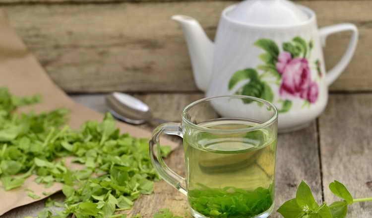 Чай со звездчаткой средней от плечелопаточного периартрита