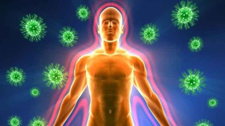 Фенхель укрепит вашу иммунную систему