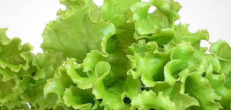 Листья салата польза и свойства растения