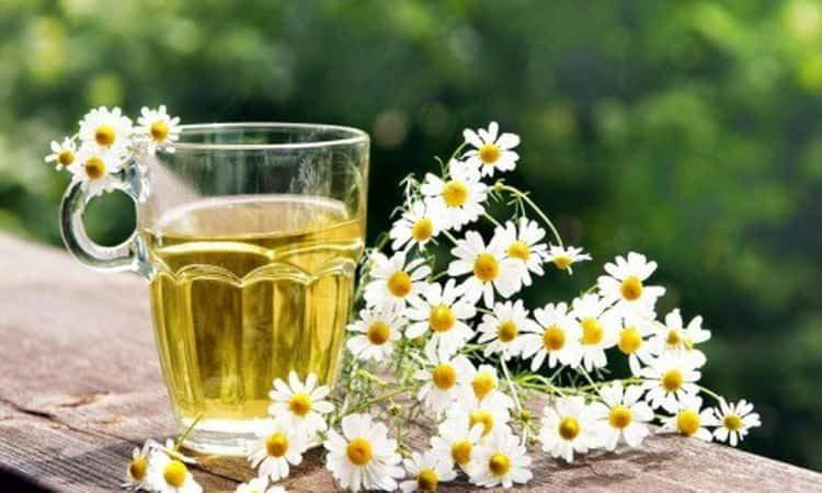 Цветки ромашки: лечебные свойства и противопоказания