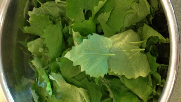 Измельченные листья растения используют для примочек.