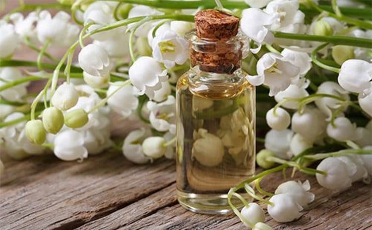 В косметологии используется также эфирное масло растения.