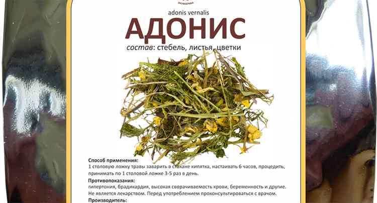 Адонис весенний в сухом виде препарата