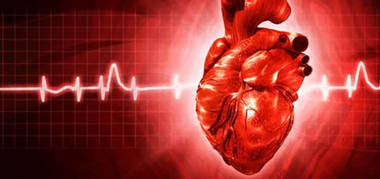 Опята помогут избежать аритмии сердца