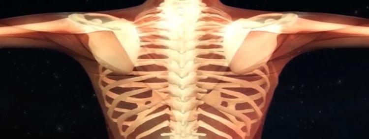 Для укрепления костей принимайте нут