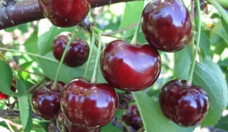 Важно понимать, что вишня может принести не только пользу для здоровья организма человека, но и вред, если есть ее слишком много.