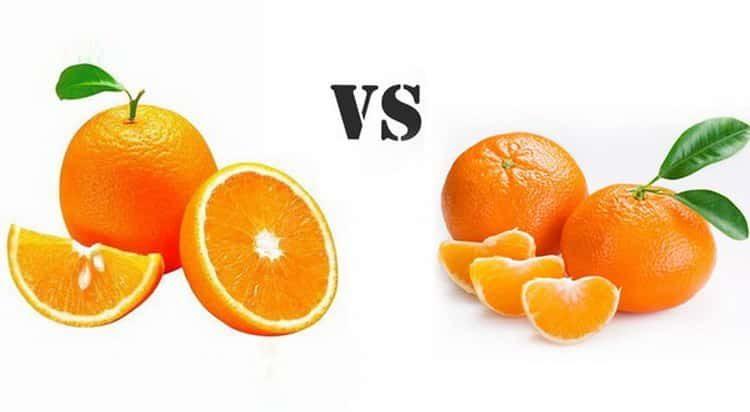 красные апельсины – польза и вред для здоровья