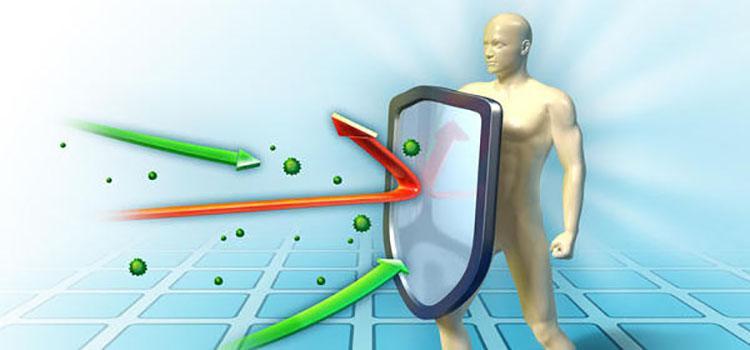 Подорожник поможет укрепить ваш иммунитет
