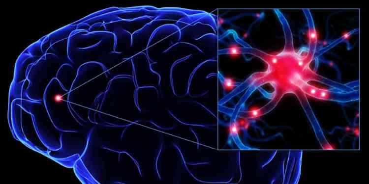 Страусник поможет от эпилепсии