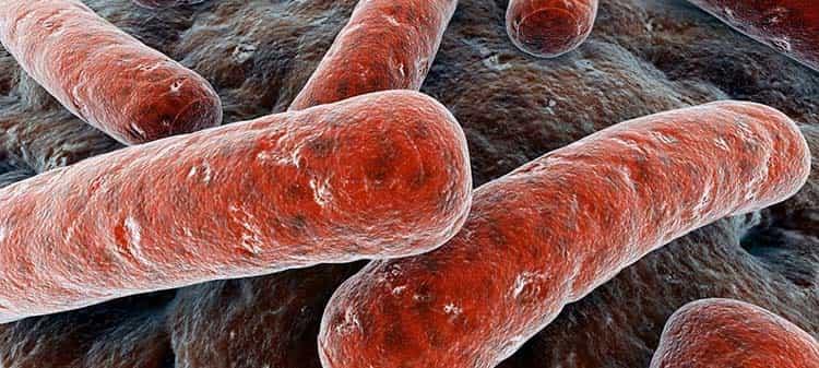 Пажитник в лечении туберкулеза