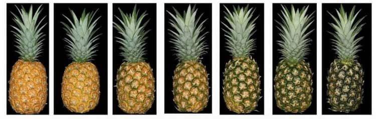 Сушеный ананас польза и вред