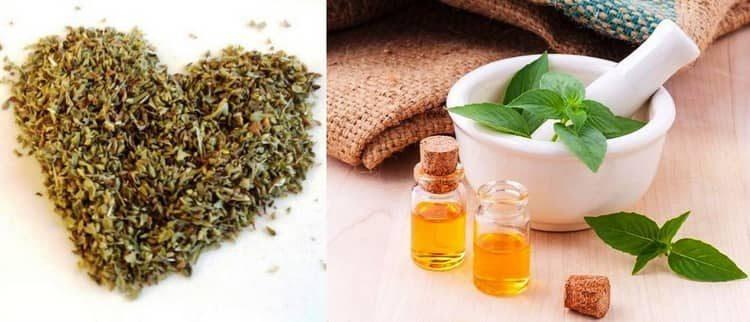 Трава душица, лечебные свойства и противопоказания