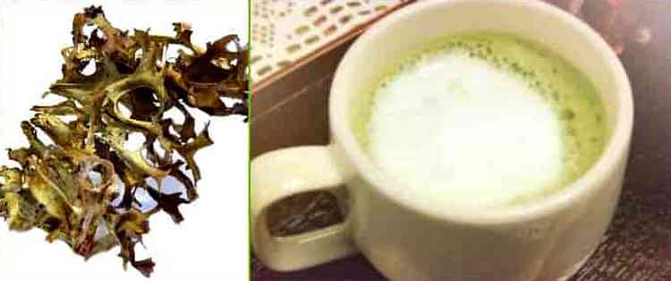Узнайте также, как заваривать исландский мох от кашля.