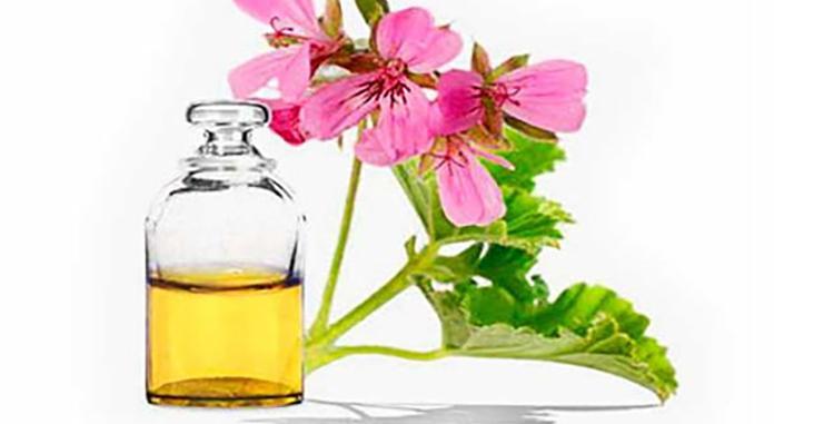 Эфирное масло пеларгонии и его свойства