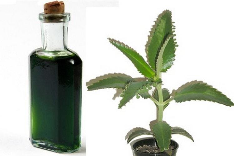 Можно заготовить также биостимулированный сок.