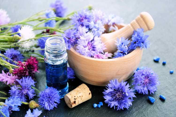 Настой цветков василька при атопическом дерматите