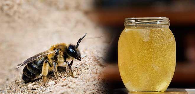 Мед андрены