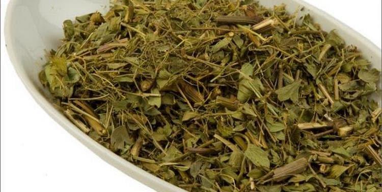 Сушеные листья используются для приготовления целебного настоя.