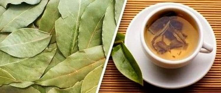 Польза, лечебные свойства и противопоказания к употреблению лаврового листа