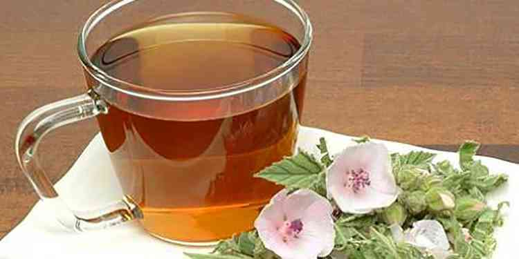 Алтей польза чая из растения