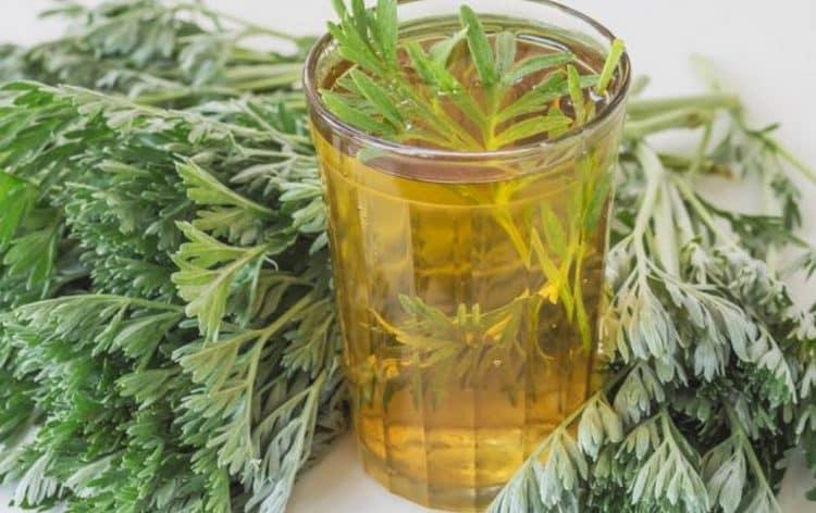 Если болит селезенка с левой стороны под ребром, для лечения можно применять отвар полыни с медом.