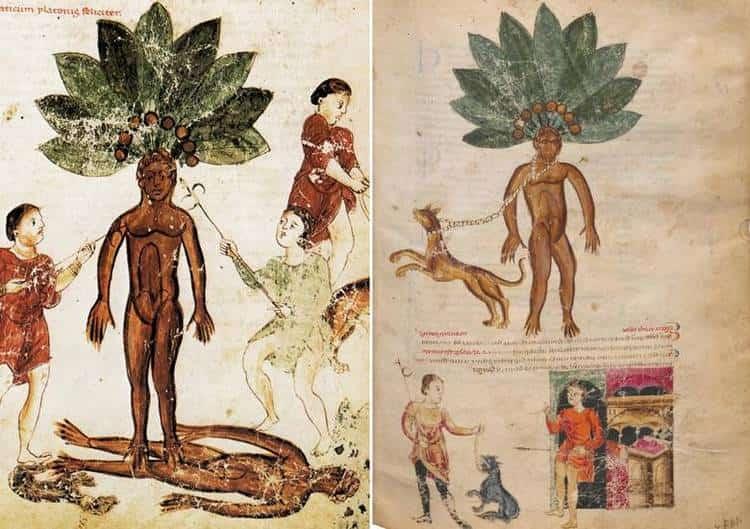 Ранее для того, чтобы выкопать корень мандрагоры, проводили целый ритуал.
