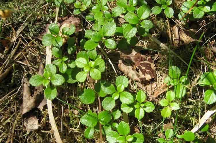Траву можно использовать вместо мочалки в душе при проблемах с кожей.