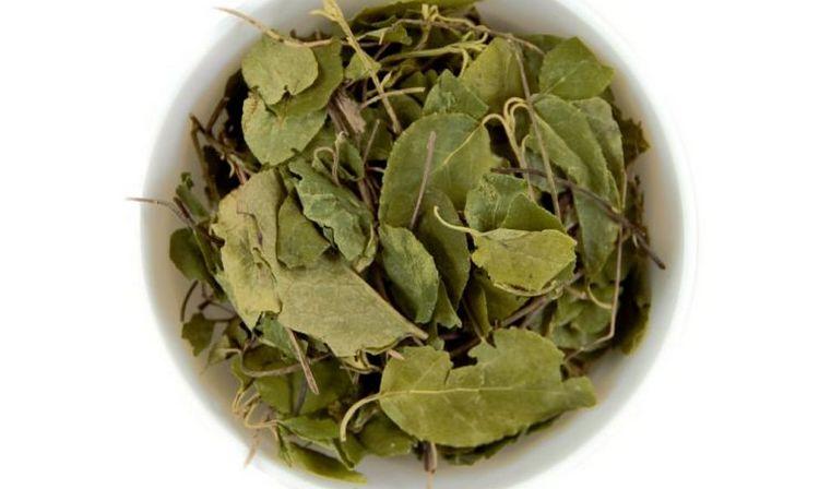 Для приготовления отваров используются сушеные листья растения.