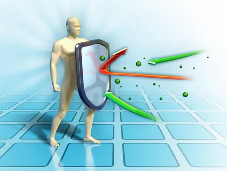 Сушеная хурма: польза и вред для организма