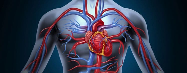 Маниока поможет при проблемах с сердечно-сосудистой системой